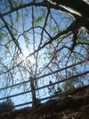 Edge_under_tree